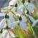 Kedvezményes tavaszváró hétköznapok